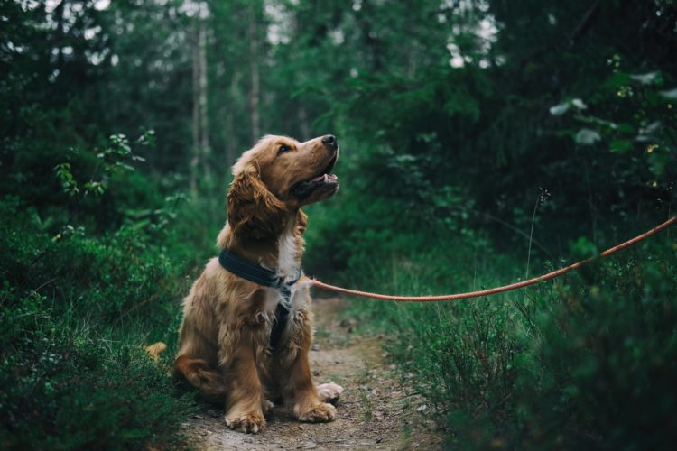 Why Professional Dog Walkers Need Insurance